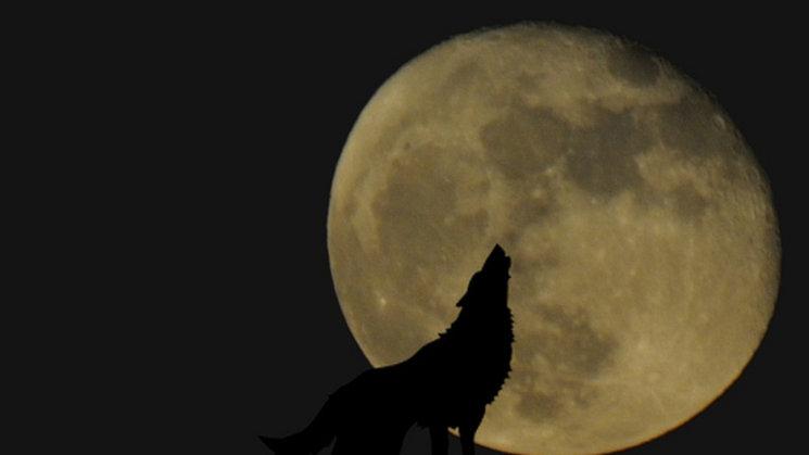 Eclipse Total De Luna El 21 De Enero No De Superluna
